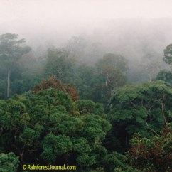 Amazon Rainforest Layers Diagram Ford Fiesta Mk7 Radio Wiring Emergent Trees Of The
