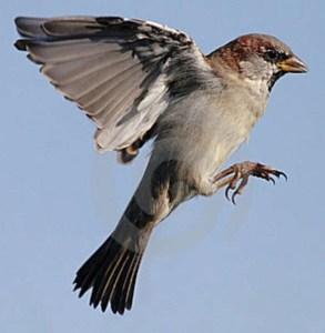 sparrow-3182074
