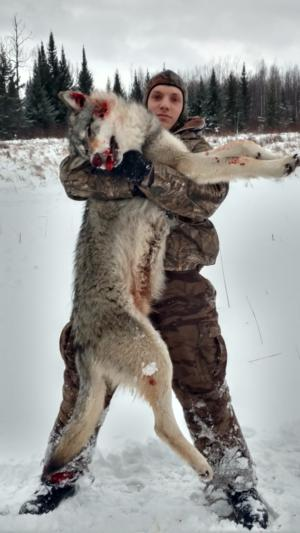 Ontario Wolf Hunts  Rainy Lake Outfitters Inc