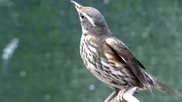 Risultati immagini per wild italy uccelli rai