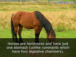 19 Fun Facts About Horses Raise Your Brain
