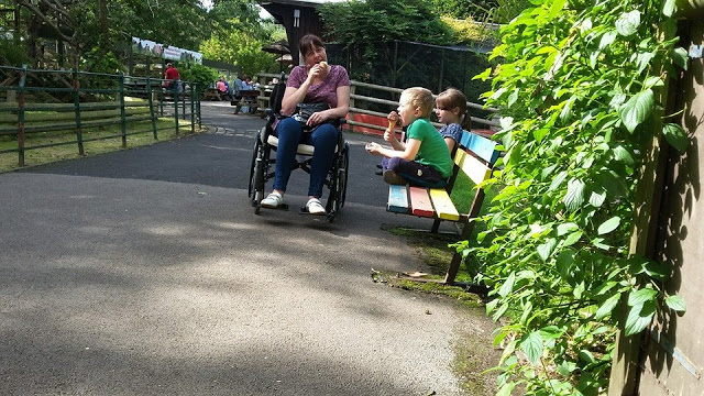 in a wheelchair in the nature centre. My life with Transverse Myelitis