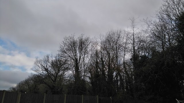 dark wintery trees with no leaves and a heavy sky full of dark cloud