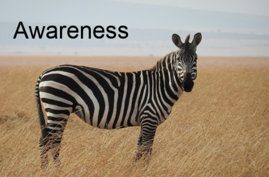 a zebra in a golden field and the word 'Awareness' in bold