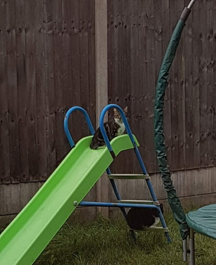 two cats on a green slide. One is sitting at the top of the slide, the other is sitting on the bottom rung of the ladder.