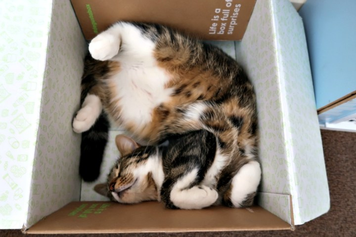 A cat in a box in a weird twisted position fast asleep