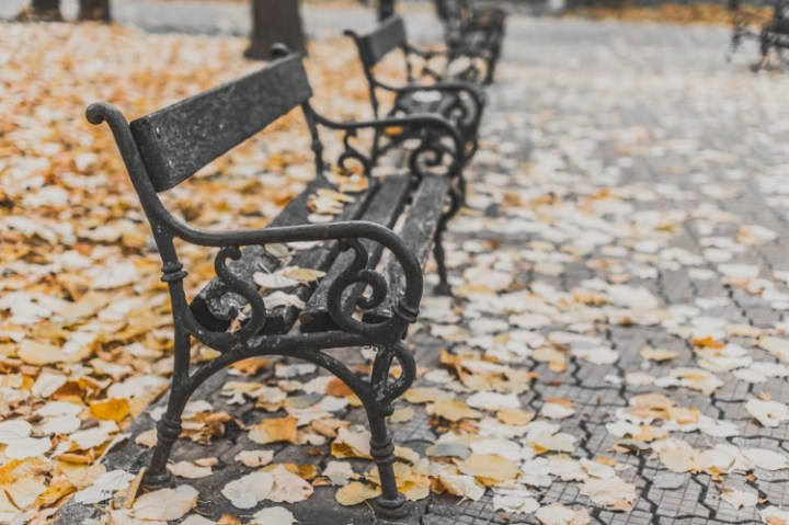 park bench with autumn leaves