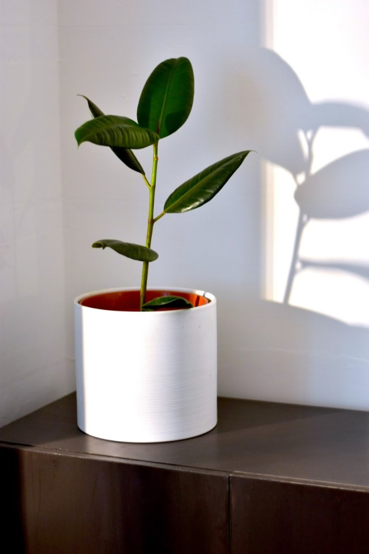 a green houseplant in a white vase on a wooden cupboard, gifts for move out