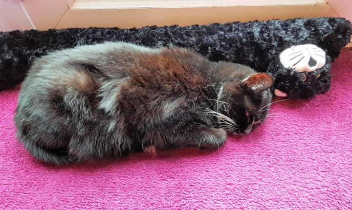 Sabrina, the black cat snuggled up to a black cat draft excludor.