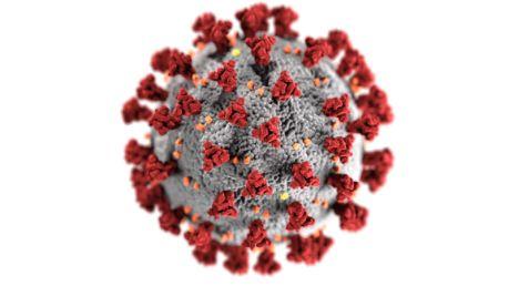 an image of the corona virus