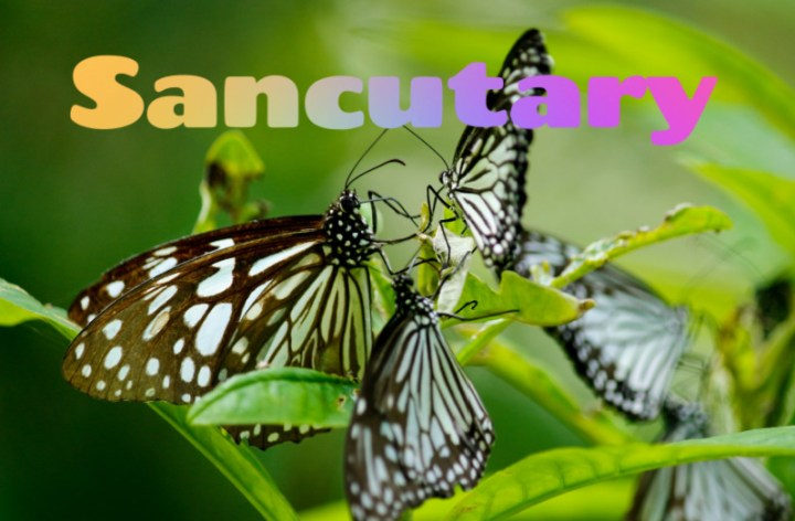 The word Sanctuary imprinted over a photograph of butterflies