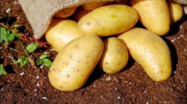 Potato Price Rains Kerala Flood