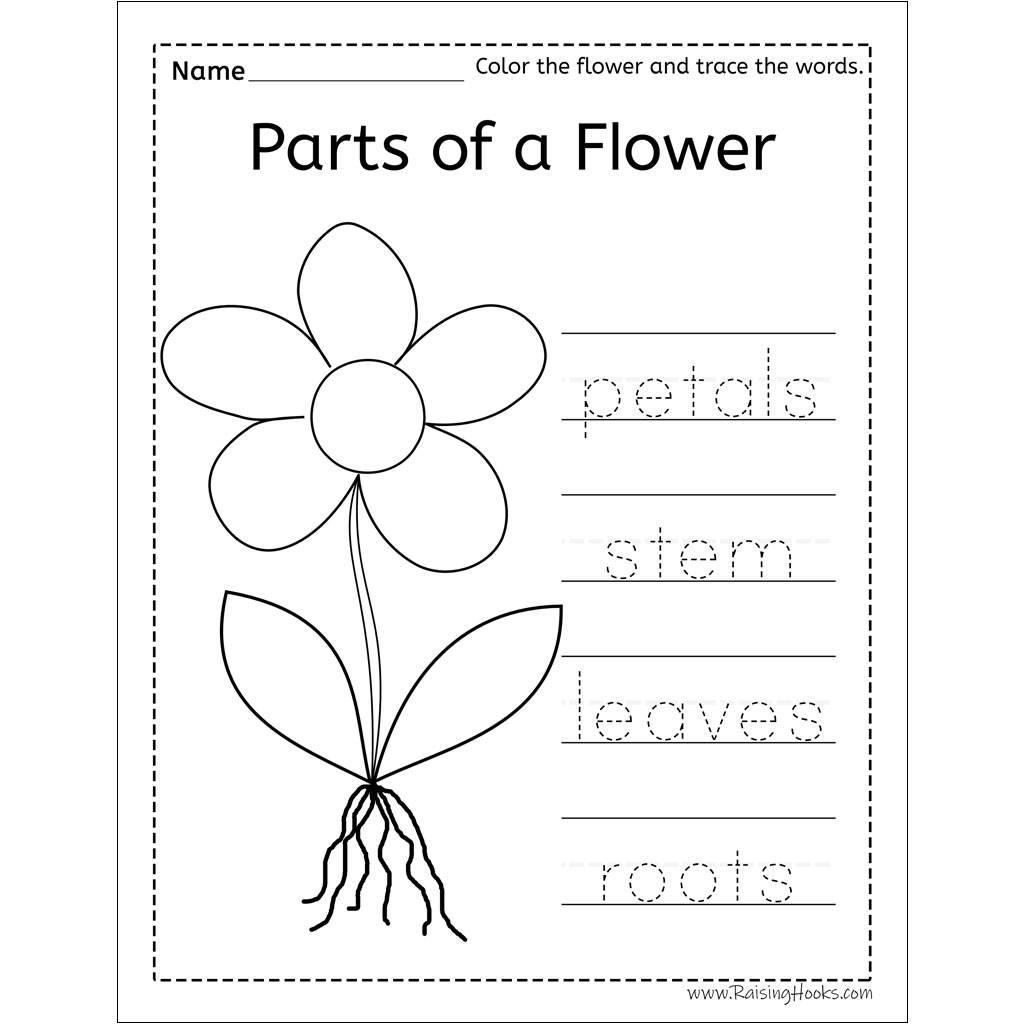 50 Tracing Pictures Of Flowers