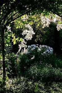 Moonlight Gardening | Raising Jane Journal