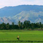 Dreaming of Rice | Sayuri Ayers