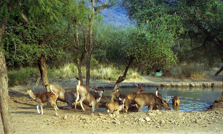 Sariska Tiger Reserve in Alwar