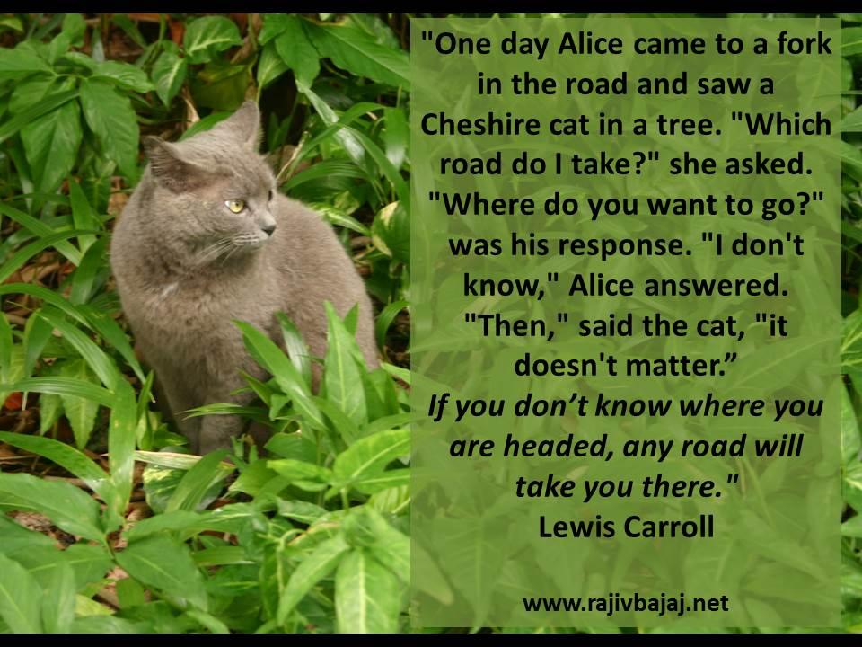 Cat In The Tree