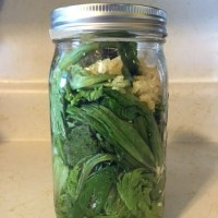 Guest post by Flower- Fermented Lettuce