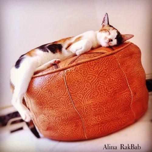 chat trois couleurs sieste pouf marocain en cuir