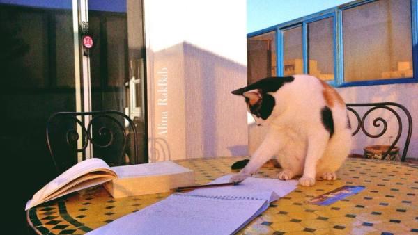 chat terrasse table écriture livre lever de soleil
