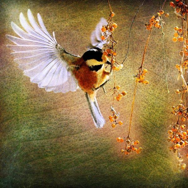 oiseau en vol peinture ailes déployés printemps nature