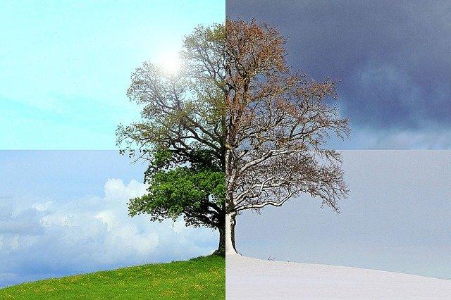 saison printemps été automne hiver arbre soleil neige