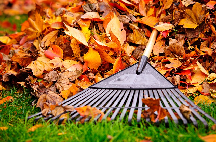 The Angie's List Guide to Fall Cleaning