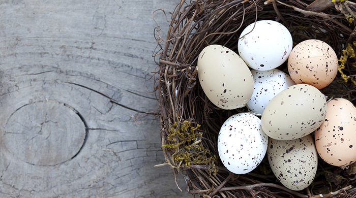 Nest with eggs for Easter