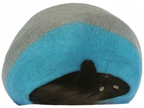 Cat laying upside down in cat bed
