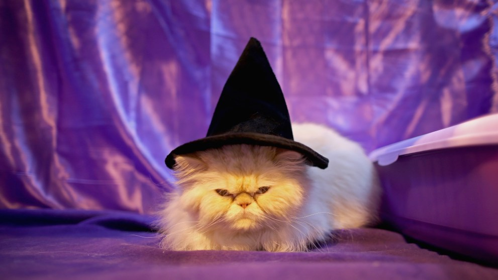10 Halloween Pet Costumes That Are Next Level Cuteness