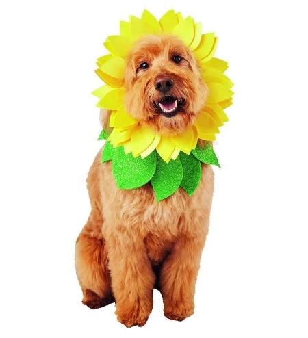 Sunflower dog costume