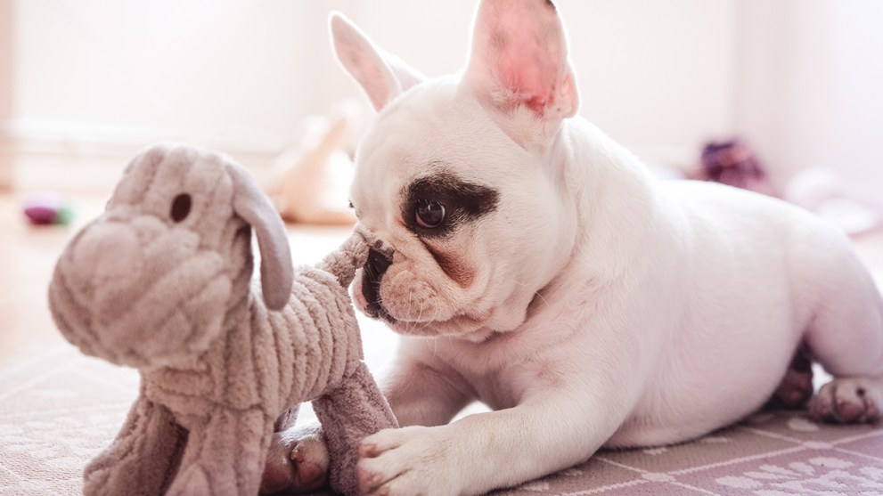 15 Gifts to Spoil Your Dog on National Dog Day