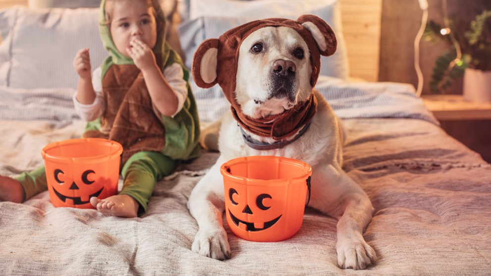 10 Matching Dog & Owner Halloween Costumes