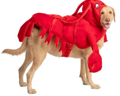 Thrills & Chills Halloween Lobster Dog Costume