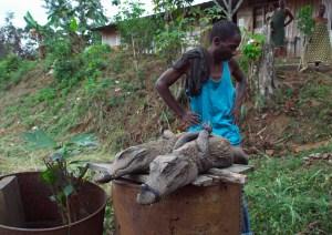 Krokodile zu verkaufen, Gabun Westafrika