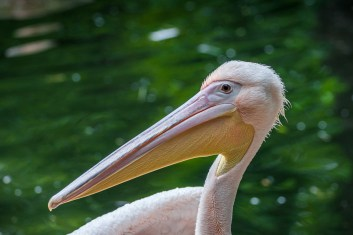 12_07_13_Zoo_Hannover-1-1