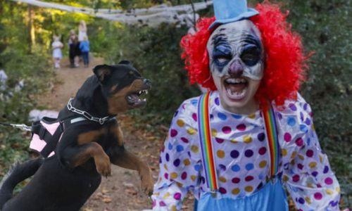 horror-clown-verletzt-schulerin