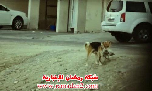 Hund-Begrabniss-Katze