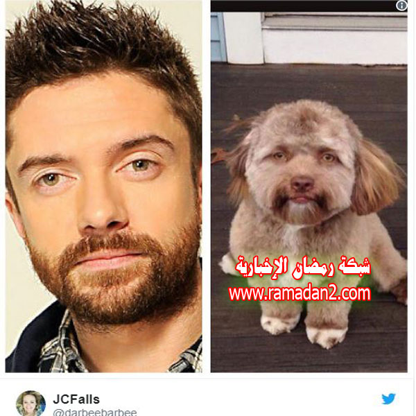 Hund.Genau-Wie-Mensche3