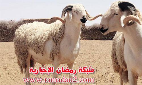 Schaff-Eid-Saed