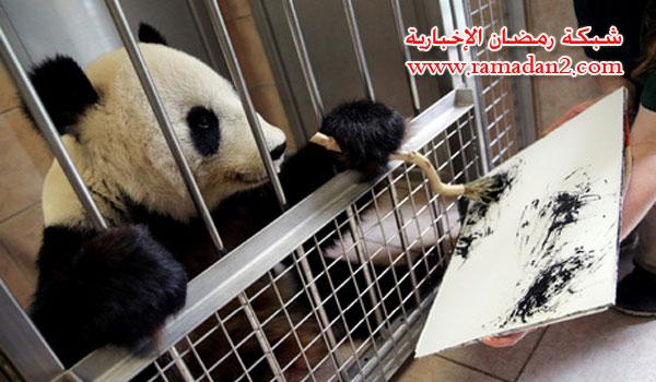 Panda-Malen-2