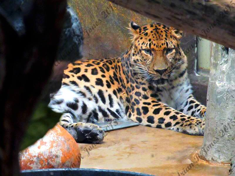 Photography from Denver Zoo, Colorado