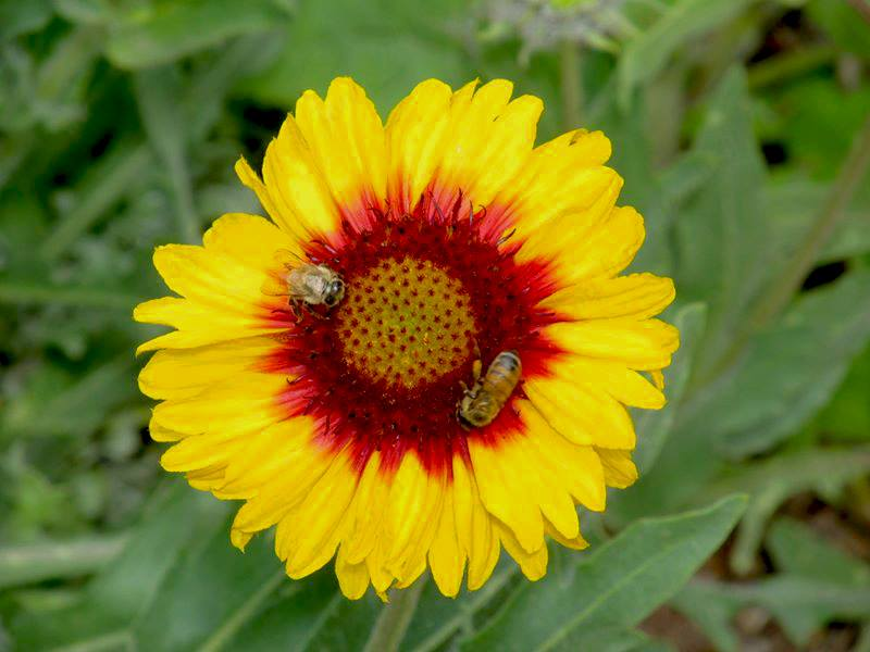 Photography from Denver Botanic Gardens, Colorado