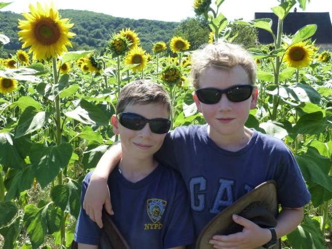 In the sunflowers.