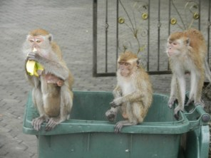 Monkeys at Batu Caves.
