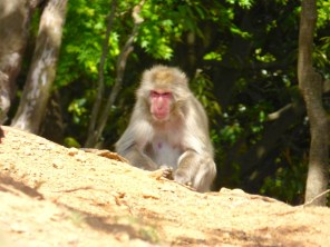 Japanaese Macaque.