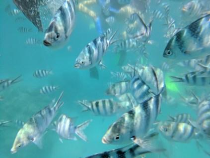 Fiji fish.