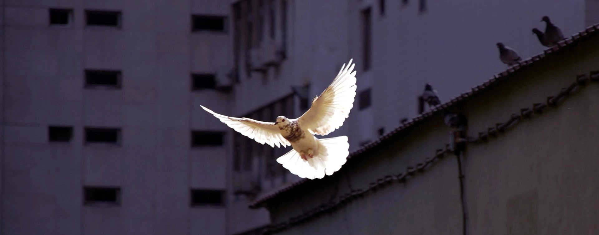 Holy Spirit upon all people