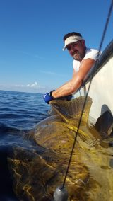 Goliath Grouper Jew Fish Fishing Chater