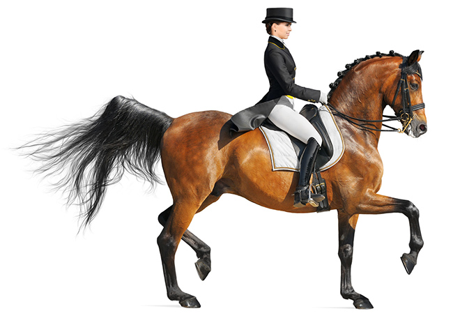 We clean and restore saddles and equestrian attire